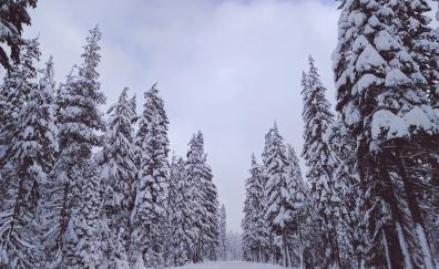 Winter day trees snow 4k