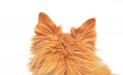 Ears furry dog back