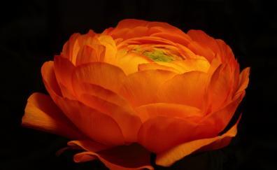 Close up golden flower