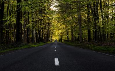 Highway forest tree spring