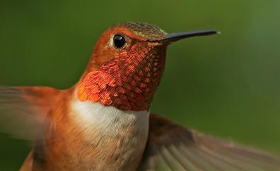 Close up humming bird beautiful
