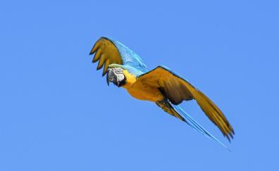 Flight parrot green bird