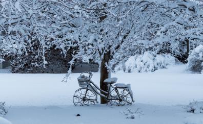 Winter tree bicycle snowfall