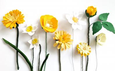 Yellow flowers, fresh, leaves