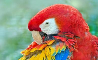 Close up macaw bird muzzle