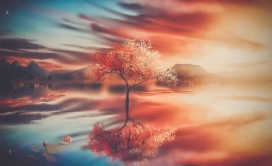 Autumn, tree, sunset, reflections