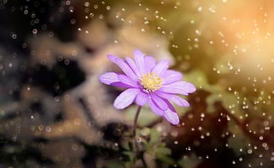 Anemone blue flower glitter