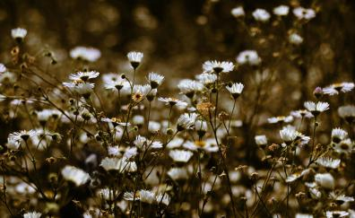 Meadow, plants, white flowers, spring