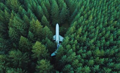 Airplane trees aerial view