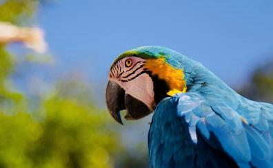 Parrot muzzle