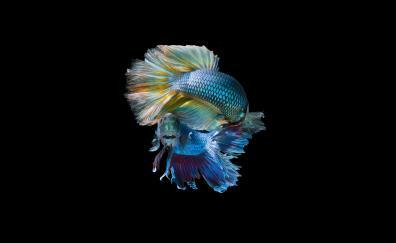 Fish pair dark minimal