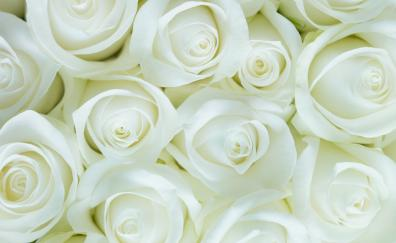 White roses, decorations, flowers