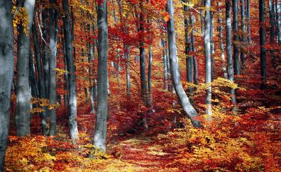 Tree autumn fall forest nature
