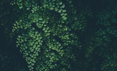 Green leaves plants