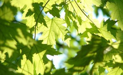 Spring leaves tree