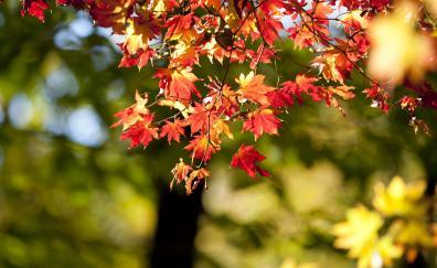 Autumn, nature, leaves, bokeh, blur
