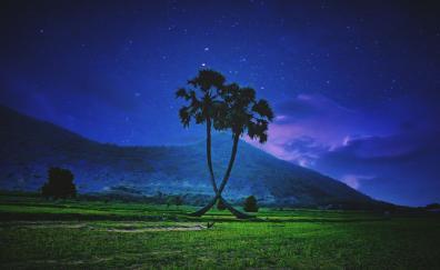 Palm trees, landscape, night, sky