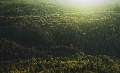 Aerial view, trees, forest, nature