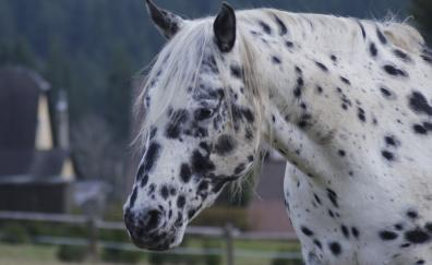 Horse muzzel black spots 4k