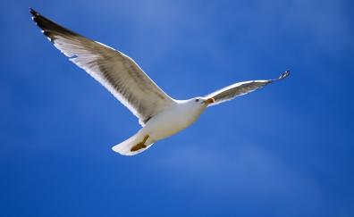 Blue sky bird seagull flight