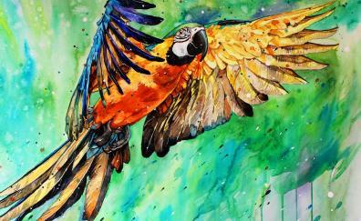 Macaw parrot art