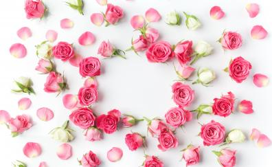 Flowers, petals, pink roses, flowers