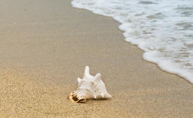Seashell sand foam beach