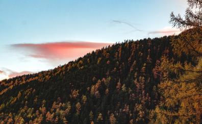 Trees sky autumn hill