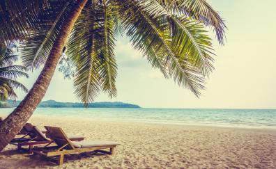 Palm tree beach sand summer