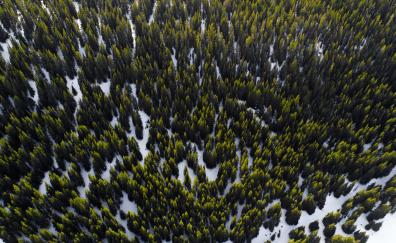 Trees, aerial view, forest, nature