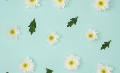 Chamomile leaves minimalism