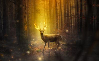 Dear forest digital art