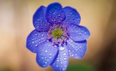 Blue flowers water drops portrait