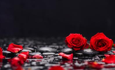 Red roses petals rocks surface