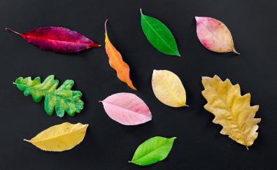 Autumn various leaves