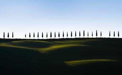 Green landscape trees minimal