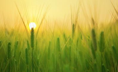 Barley field grass threads 4k