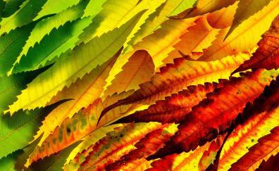 Colorful, leaf, autumn, close up