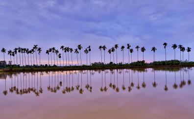 Trees lake reflections dawn