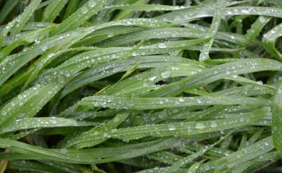 Big grass water drops