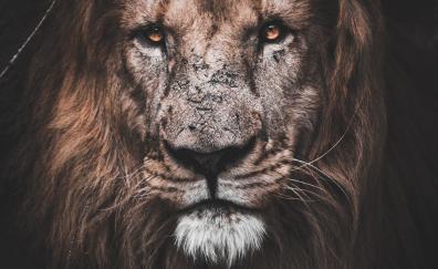 Might lion muzzle