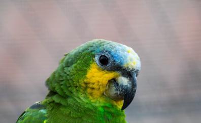 Parrot colorful bird muzzle