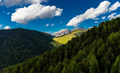 Trees mountains clouds summer