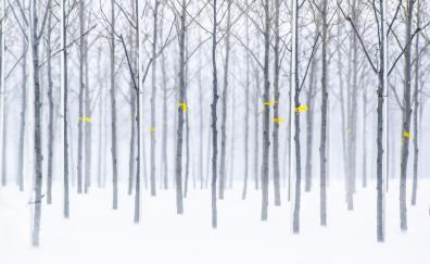 Trees, forest, winter, nature