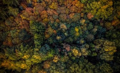 Autumn trees forest aerial view