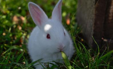 8 Rabbit Hd Wallpapers Desktop Pc Laptop Mac Iphone Ipad